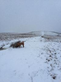 snow-on-moor